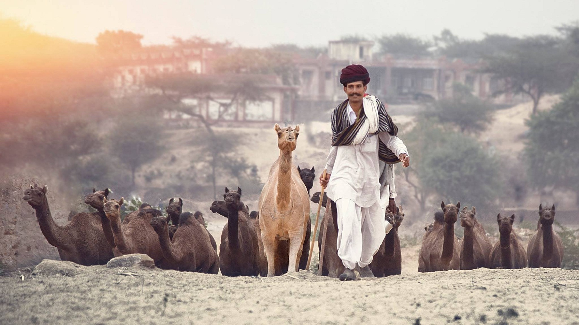 Camel Fair : Pushkar (20 Oct. - 1 Nov. 2017)